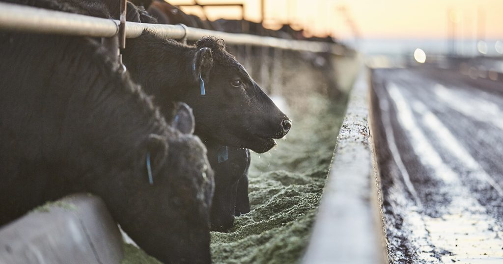 Animal Nutrition and Feed, Livestock Nutritional Consulting, Dairy Nutritional Consulting, Nutritional & Feed Products