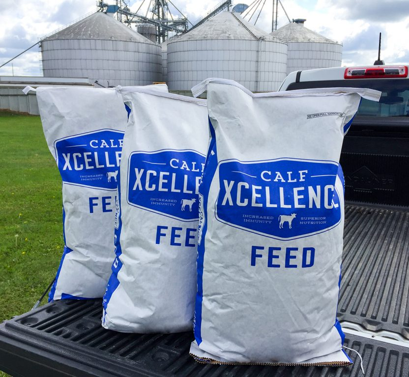 Animal Nutrition and Feed, Dairy, Feed, DairyXcellence