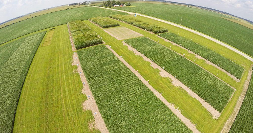 Crop Protection, Pest Management, Agronomist Focus, Weed Management Plan