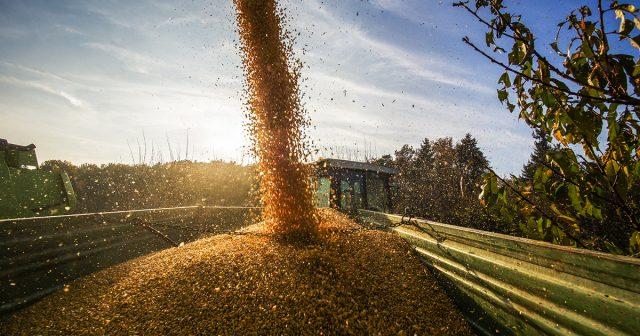 Grain Risk Management, Grain Services, Our Grain Team, Grain Marketing, Risk Management