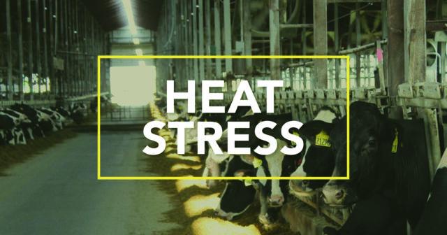 heat stress, animal nutrition