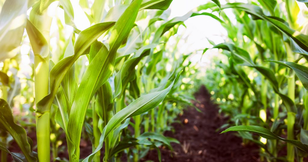 crop insurance, leasing options, ag financing